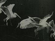 270px-Marey_-_birds